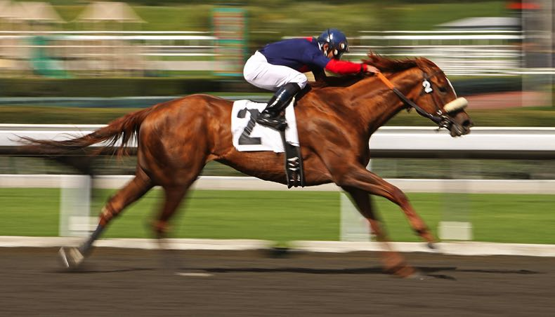 Horse racing home stretch