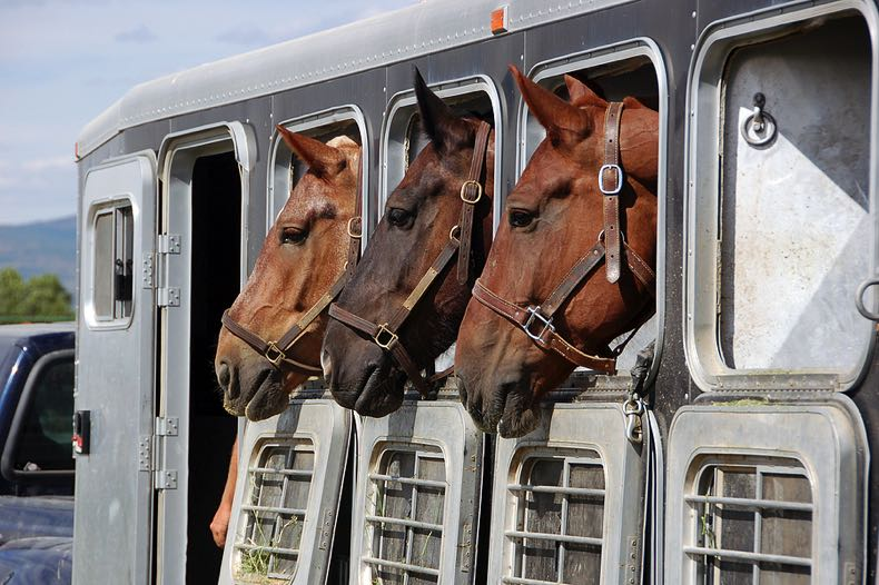 Horse trailer with three horses