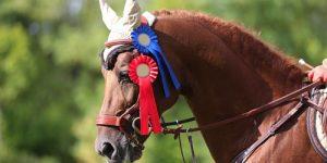 Horse Racing Prize Winner
