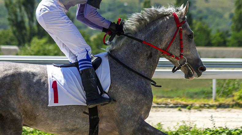 Grey racehorse up close