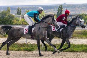 Grey race horses