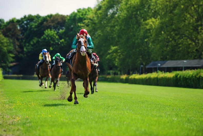 Novice horse race