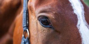 Up close horse