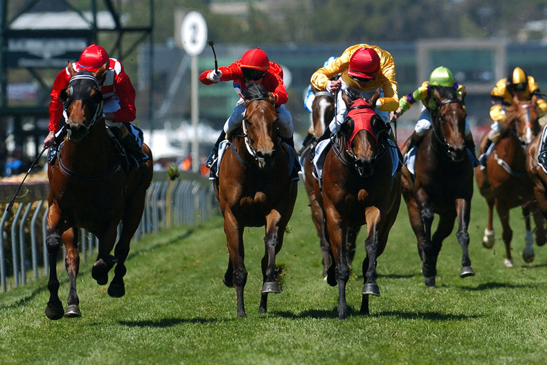 Group of Horses in Race